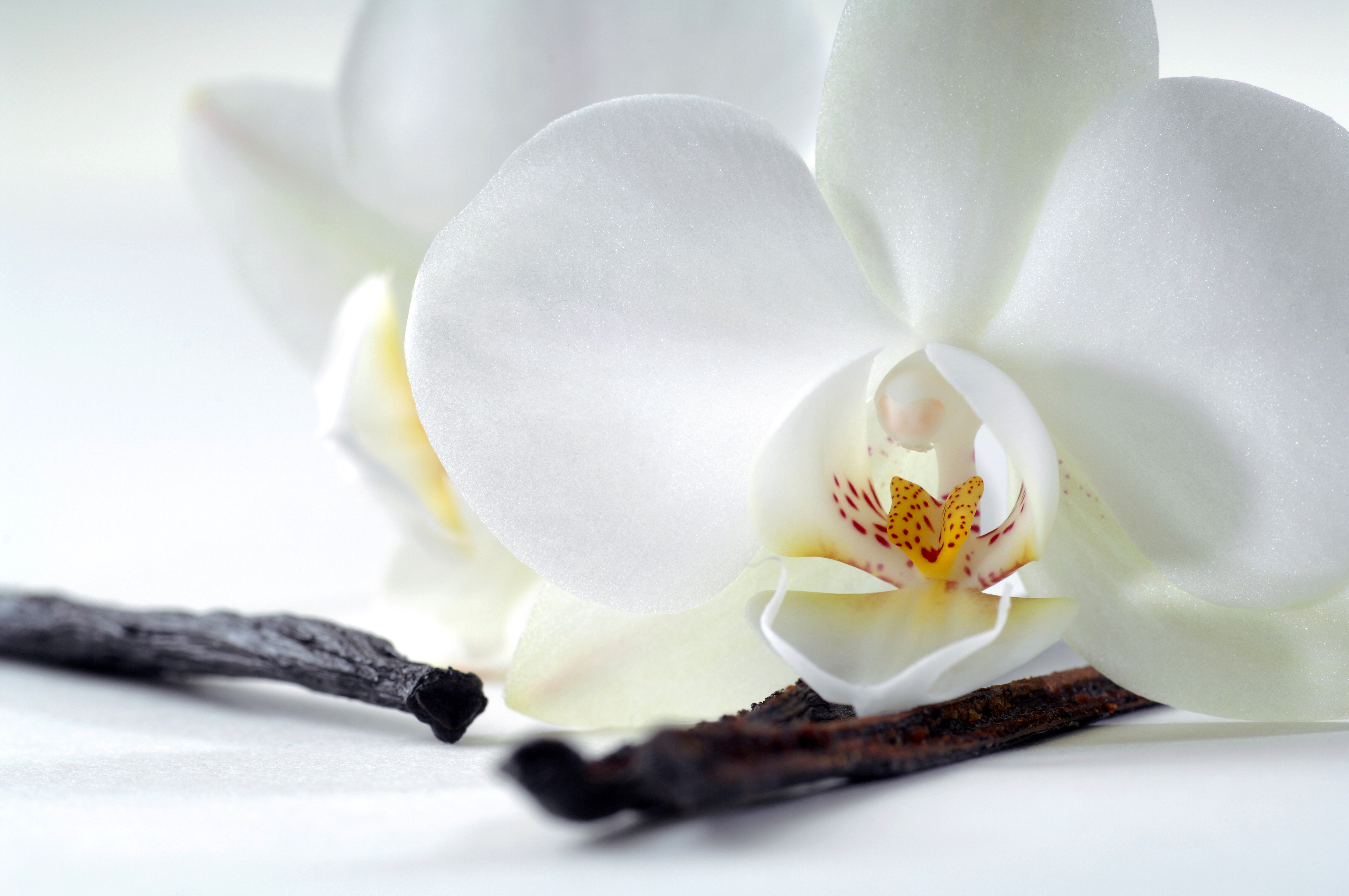 Tropical Island Beach Ambience Sound: Scent Spotlight: Best Vanilla Scented Perfumes